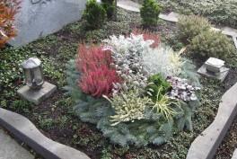 Geranien in unserem Blumenhaus in Reichenbach