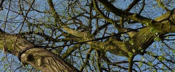 Baumsicherung durch Fachleute der Gärtnerei und Blumenhaus Meier
